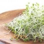 ブロッコリースプラウト レシピ 3日に1回20gの食べ方