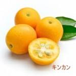 金柑(キンカン)の甘露煮の作り方 下処理からも紹介します。