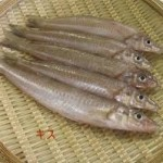 魚のキスのさばき方・おいしく食べるレシピを紹介