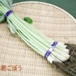 若ごぼうレシピ 下処理や葉の食べ方も紹介します。