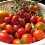 トマトだけのサラダレシピ 大量消費に人気の味付けサラダ
