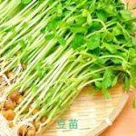 豆苗(とうみょう)レシピ 人気のサラダの作り方
