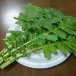 大根の葉レシピ 人気の炊き込みご飯を作ってみよう。