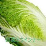 白菜とウインナーを使った 簡単人気レシピまとめ