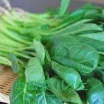 小松菜のナムルレシピ 人気 1位はつくれぽ2000人以上